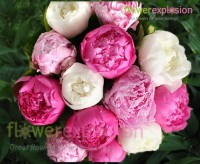 Assorted Colors Peonies January February