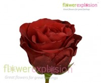 Red Diamond Rose