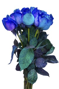 Purple & Blue Tinted Roses