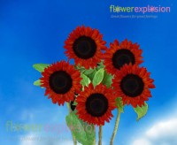 Red Mini Sunflowers