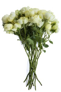 Creamy White | Spray Garden Rose
